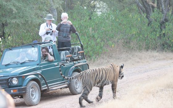 A journey with Maharajas' Express can take you in the midst of breathtaking settings and adventure, at the Ranthambore Tiger Reserve.  http://blog.the-maharajas.com/the-adventurous-game-drive-at-ranthambore-in-a-way-never-seen-before/