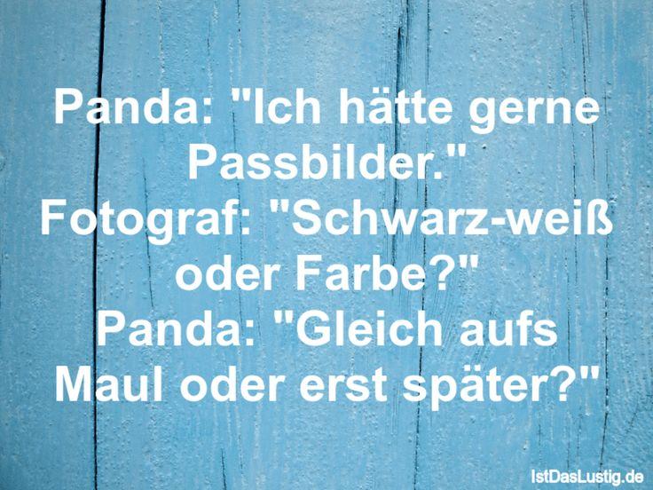 """Panda: """"Ich hätte gerne Passbilder."""" Fotograf: """"Schwarz-weiß oder Farbe?"""" Panda: """"Gleich aufs Maul oder erst später?"""" ... gefunden auf https://www.istdaslustig.de/spruch/490 #lustig #sprüche #fun #spass"""