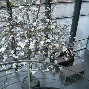 Trees made off Silk Magnolia by Seta Fiori. Www.setafiori.nl