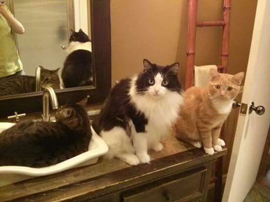 Ti-Tom, Jacobi&Lulu