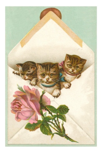 Kittens in Envelope with Rose Premium Poster