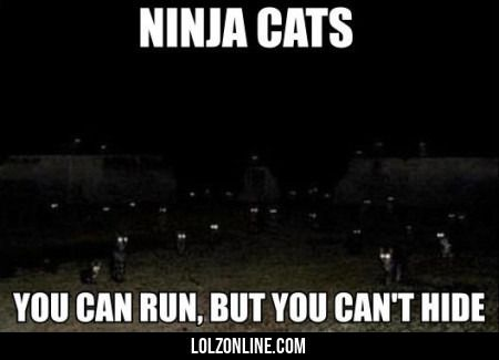 Ninja Cats, You Can Run But You Can't Hide#funny #lol #lolzonline