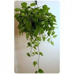 house plants india google search