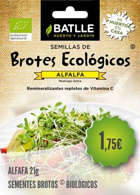 Alfafa Biológica - Sementes de brotos biológicos de Alfafa. Os rebentos são altamente energéticos e ricos em vitaminas.