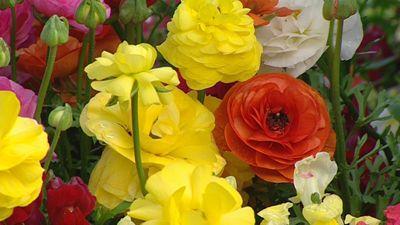 Gardening Australia - Fact Sheet: Gardening in Toowoomba
