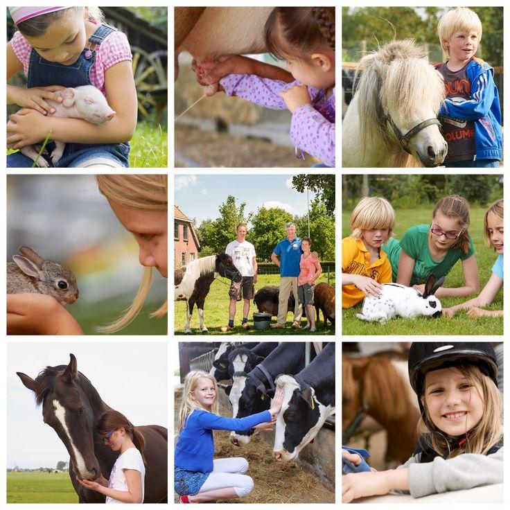 #Dierendag komt eraan! Dit vieren wij natuurlijk met de #kids en #dieren op onze #boerderijen! Boek nu een #safaritent op farmcamps.nl & kom #dierendag vieren op de #boerderij met je eigen #huisdier!  Van #hond, #kat, #cavia tot en met je #pony, ze zijn allemaal van harte welkom!