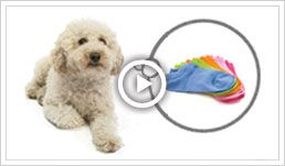 Pet Insurance for Dogs & Cats | #1 Rated Pet Health Insurance