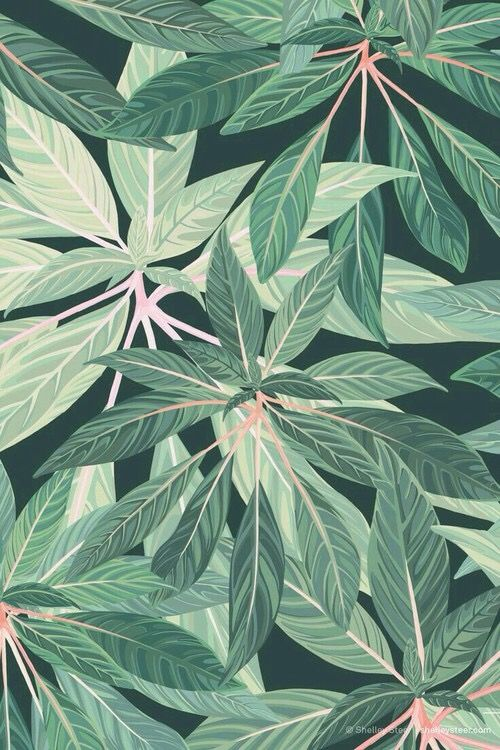 Lovely Tumblr Iphone Plant Drawing Wallpaper