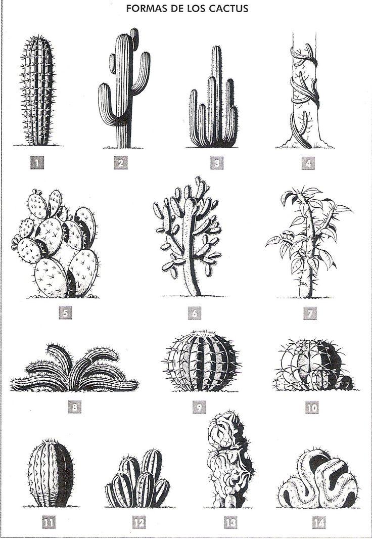 tipos de cactus - Buscar con Google                                                                                                                                                                                 More