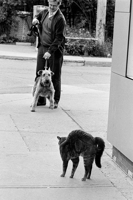 Airedales and cats, what are you going to do?
