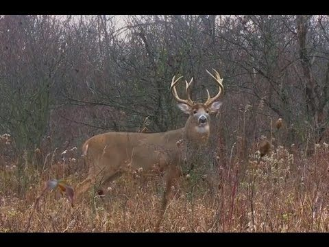 SHOT OF THE WEEK - Big Buck From A Ground Blind - YouTube