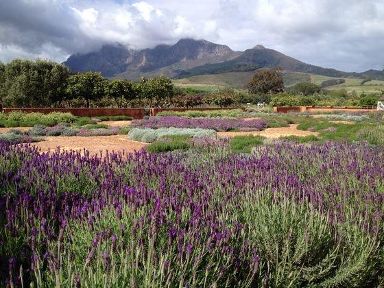 The gardens at Babylonstoren