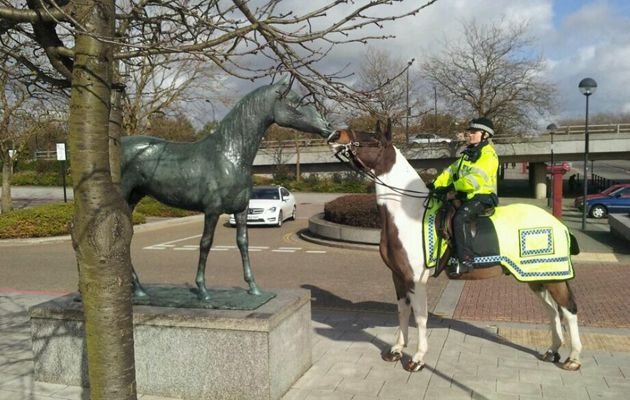 Mounted police horse Albert has been selected as a finalist in the RSPCA and Daily Mirror animal hero awards