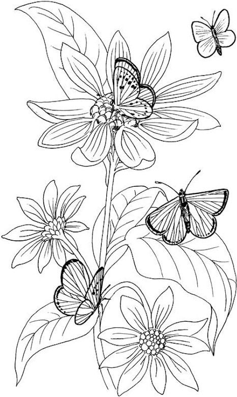 Colouring Pages Of Flowers And Butterflies : 291 best coloring book : butterfly papillon borboleta