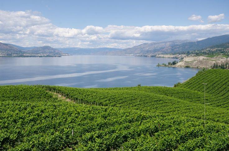 One Day Drives - Naramata Bench Wineries