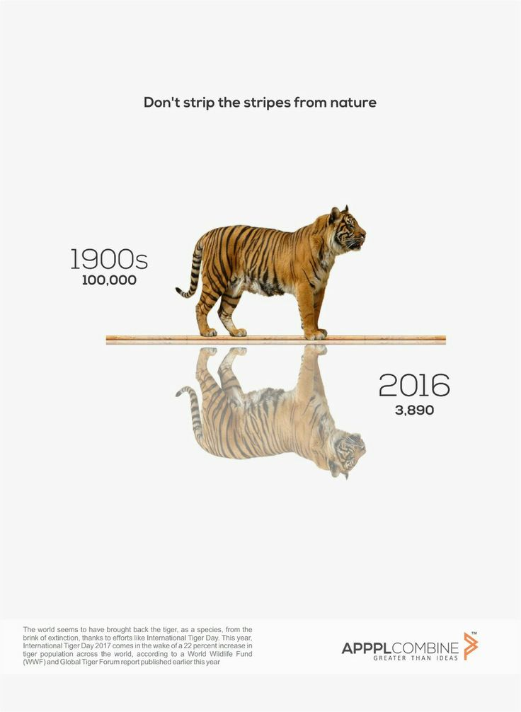 || International Tiger Day ||  Don't strip the stripes from nature