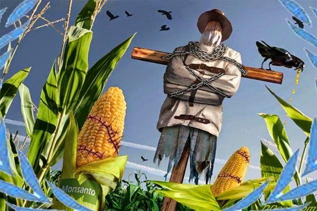 Los Cardales es una localidad que la ubicamos en la provincia de Bs As, pertenece al municipio de Exaltación de la Cruz. Una población rural, donde entre otras actividades predomina la producción d…