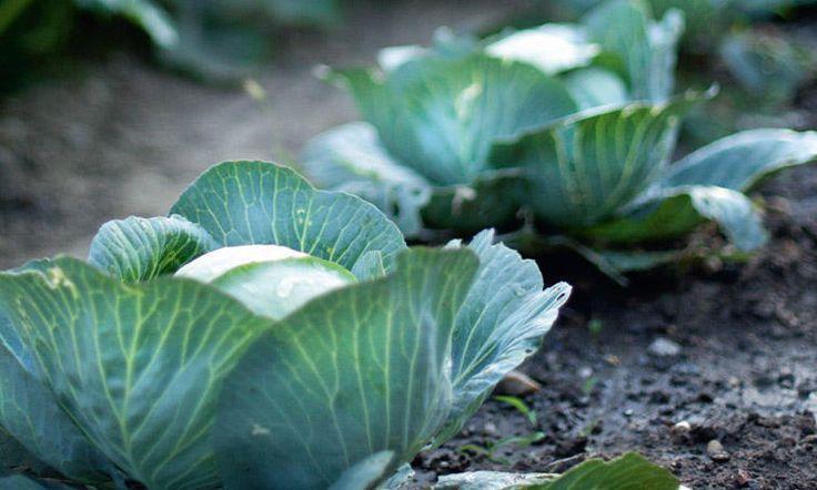 Répandre du fumier sur la terre apportera l'humus indispensable à l'équilibre biologique de votre jardin.