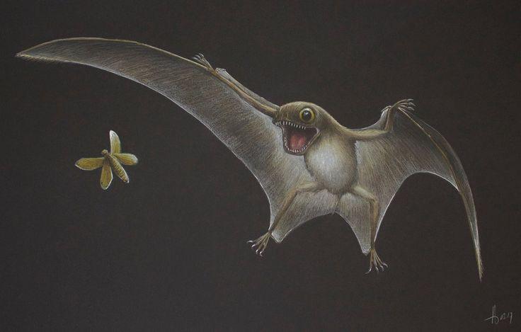 Anurognathus ammoni by RavePaleoArt on DeviantArt