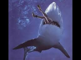 """Résultat de recherche d'images pour """"requin mangeant"""""""
