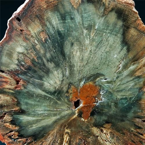 """Petrified Wood Gokwe, Midlands, Zimbabwe This is a petrified variety of conifer, named """"Woodworthia"""". The specimen is about 200 millions of years old (from late Triassic period)"""