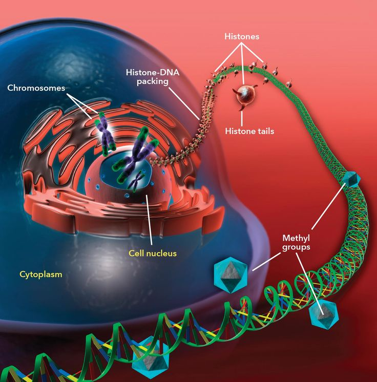 Drugging the epigenome