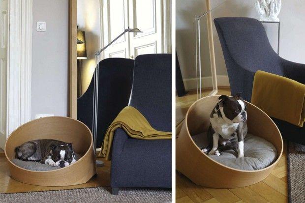 Ces derniers temps, il n'y en a que pour les chats ! Véritable rois du net, le chat est omniprésent et l'on voit beaucoup de conceptions leur étant destiné