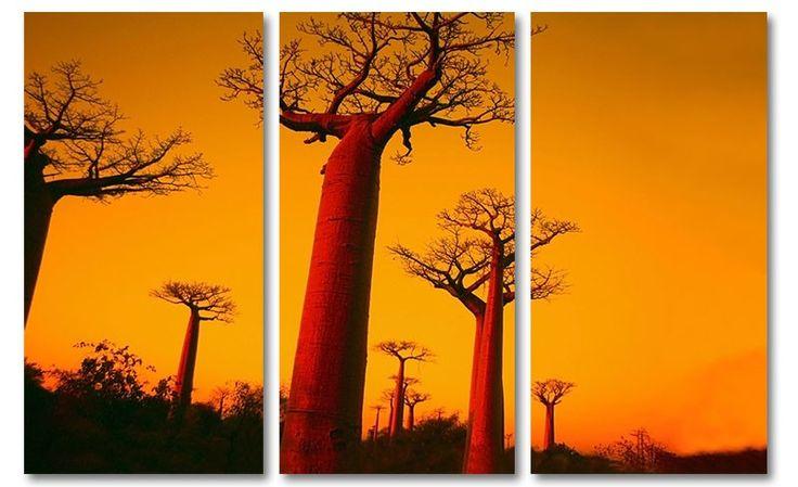 Oranje canvas foto schilderij baobab bomen Madagaskar