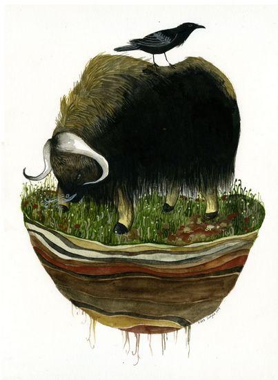 Island Biogeography (musk ox) print by Diana Sudyka