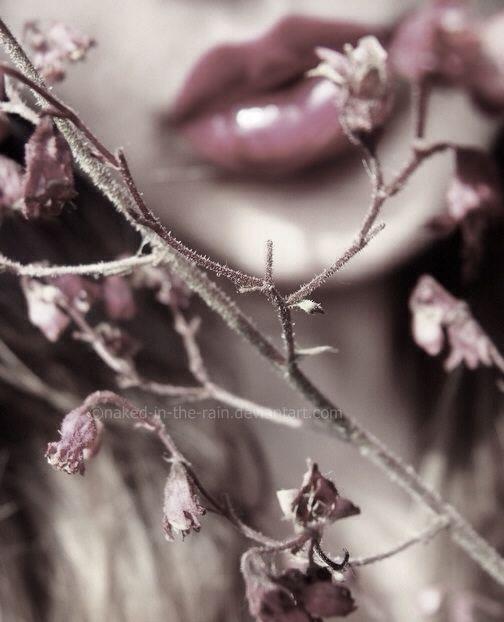 muted mauve lips ... vine flowers