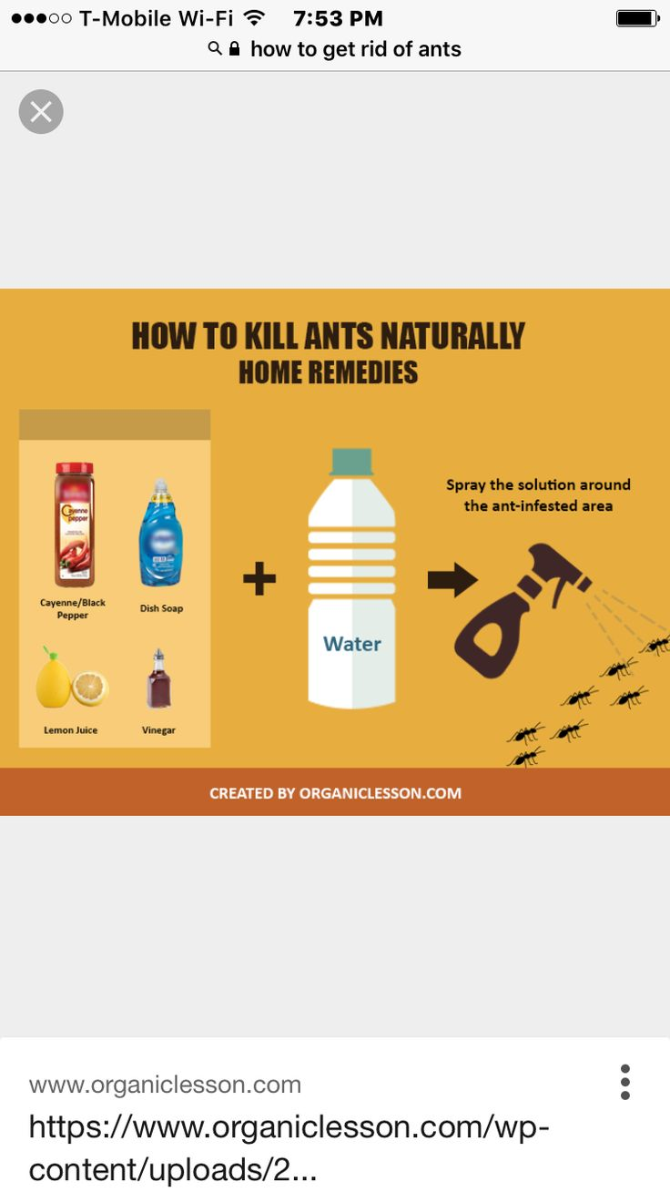 Pin by Susan H on Judy stuff Rid of ants