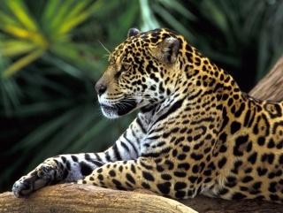 25+ best ideas about Amazon rainforest animals on Pinterest ...