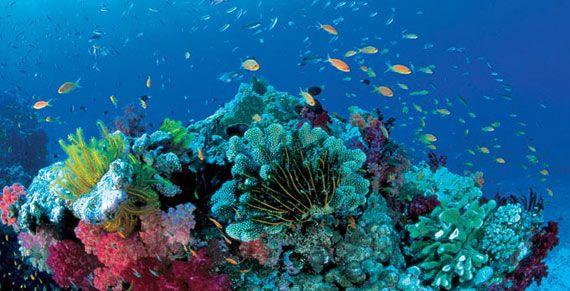 barrera de coral - Buscar con Google