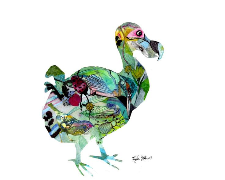 extinct species dodo bird Top 10 extinct species top 10 extinct species science full episodes on  home shows how it's made how the universe works impossible engineering .