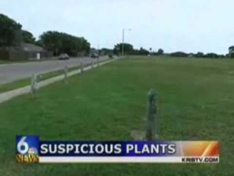 Cops pull up 400 pot plants in Texas park and then realize plants are not pot.