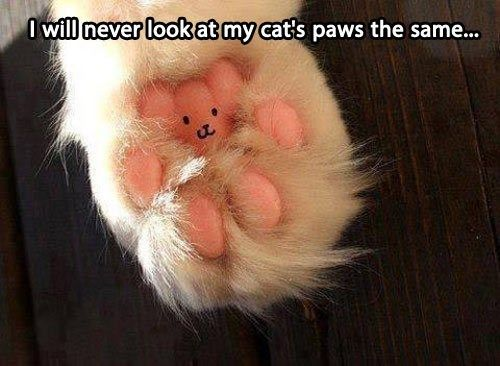 I will never look at my cat's paws the same...