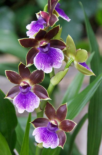 St. Paul Winter Carnival Orchid Show 2011 | Flickr - Photo Sharing!