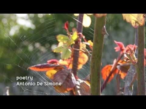 """video-poetry """"Wildflowers"""""""