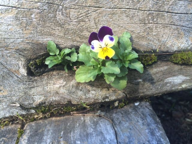 Hope can be found in the toughest of places! www.minipetals.com