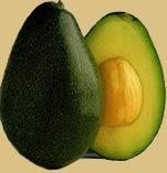 Avocado Trees For Sale