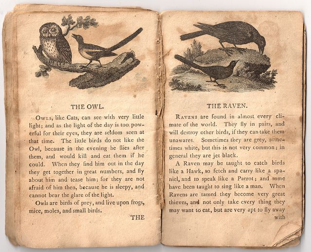 The Owl & The Raven by Aria Nadii, via Flickr