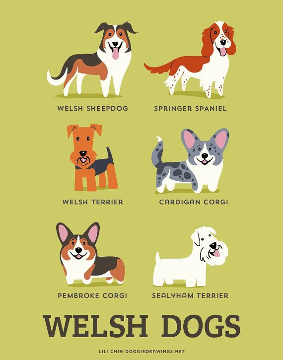 Original illustrations by me (Lili Chin, doggiedrawings.net) featuring dogs from Wales.  Welsh Sheepdog, Welsh Springer Spaniel, Welsh Terrier, Cardigan Corgi, Pembroke Corgi, Sealyham Terrier.  Please visit the DOG BREED COLORS section for more Corgis. https://www.etsy.com/shop/doggiedrawings?section_id=15663018  This is printed with Epson archival inks on 60lb premium matte paper and shipped in a rigid mailer or mailing tube.  ***You can also order prints of INDIVIDUAL DOGS and customize…