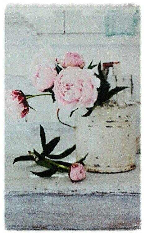Lievelings bloem pioenroos (peonies)