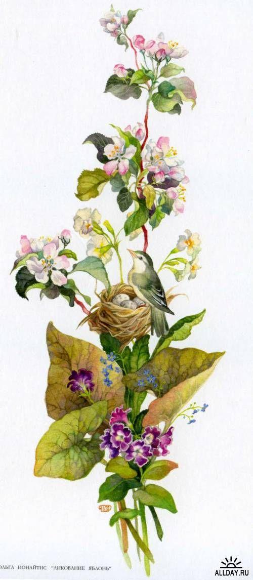 Illustrator Olga Ionaytis