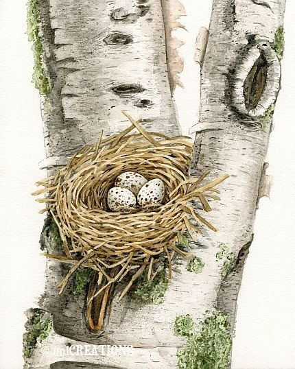 Nest In Birch Tree - 8x10 archival watercolor print by Tracy Lizotte. $22.00, via Etsy.