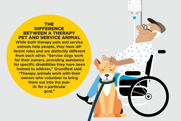 How therapy pets comfort people in times of need