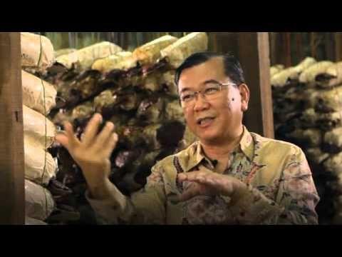 dr Lim ganoderma  & Spirulina