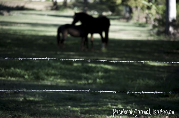 ISO400 1/500 sec. f/5.6 135 mm Shot off Brisbane Terrace, Goodna For more visit www.facebook.com/jaanaliisabrown or www.jaanaliisabrown.com #shooteveryday #horses #studentphotographer #NikonD5000 #Nikon #D5000 #shootmanual #jaanaliisabrown #visualarts #photography #affordablephotographer #Ipswichphotographer #brisbanephotographer
