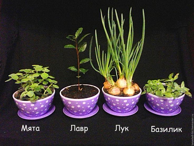 Купить Пряные травы на подоконник - пряные травы, на подоконник, чедябинск, подарок на любой случай, базилик