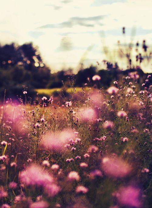 Meadow. Pink flowers.